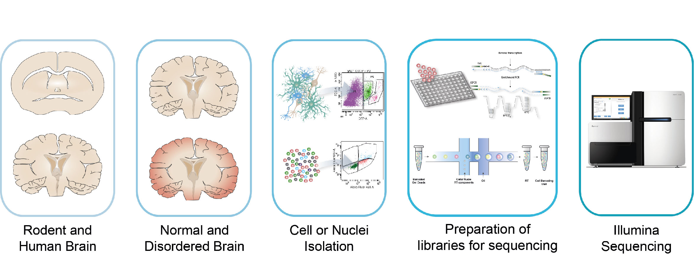 Computational analysis of single cell omics data. For further figure description contact communication@bric.ku.dk