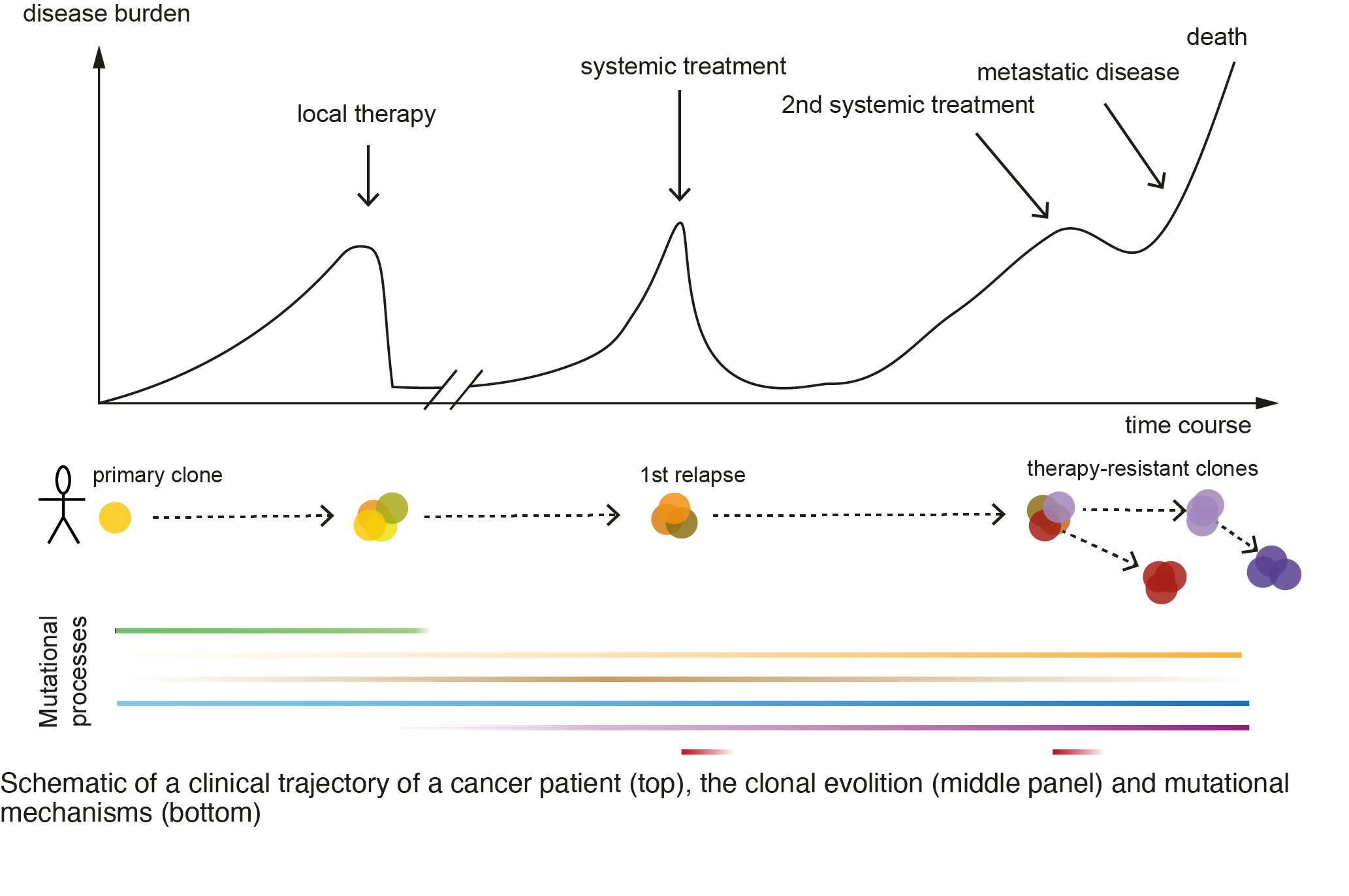 Schematic of a clinical trajectory of a cancer patient (top), the clonal evolition (middle part) and mutational mechanisms (bottom). For detailed description please contact communication@bric.ku.dk